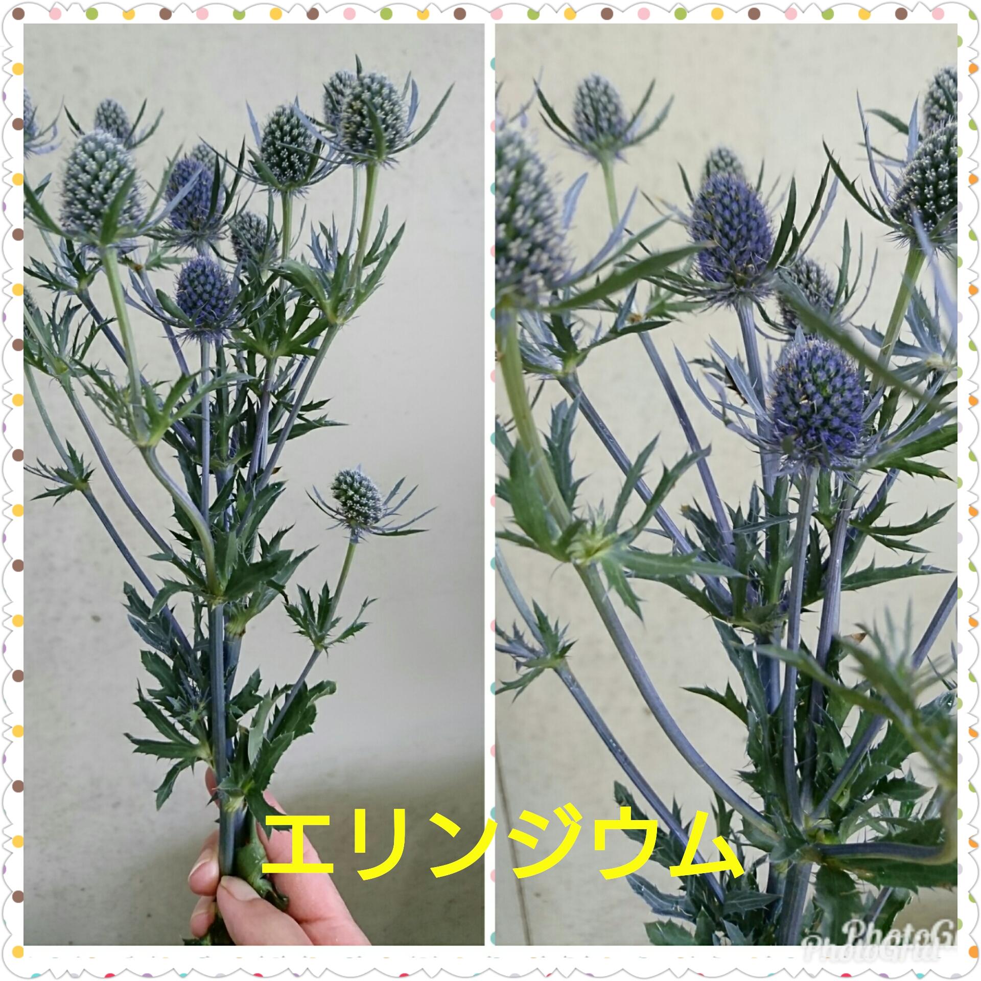 エリンジウムのお花(中央葬祭社)