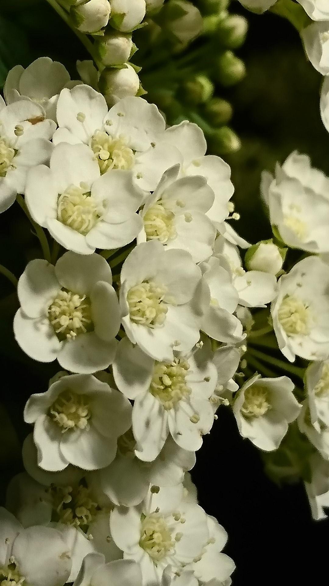 祭壇の花を見て季節を感じる(佐伯市の中央葬祭社)